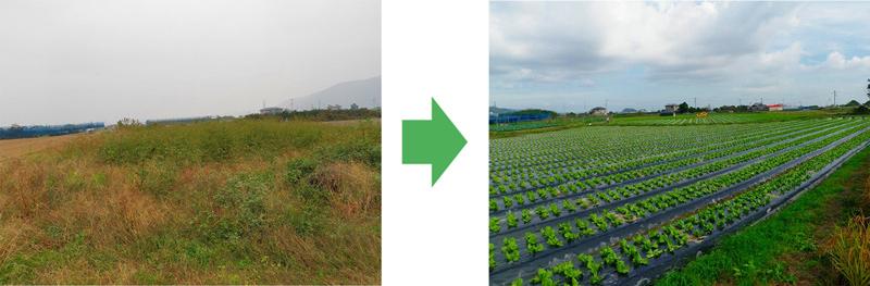 耕作放棄地の再生001