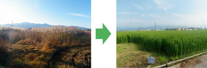 耕作放棄地の再生002