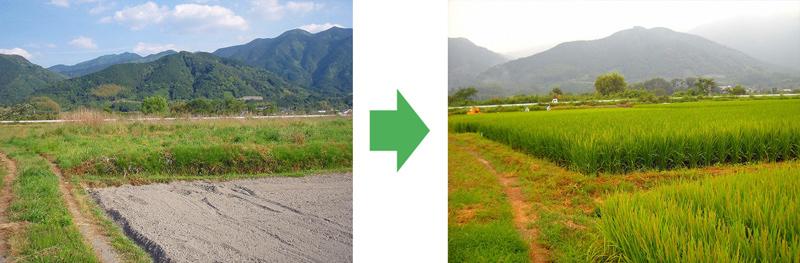 耕作放棄地の再生004