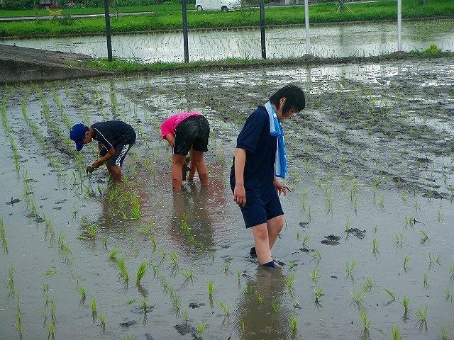 子ども農業体験002